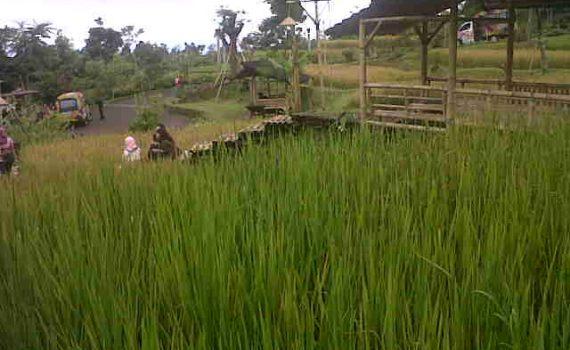 Tempat Wisata Terdekat Villa Istana Bunga Lembang