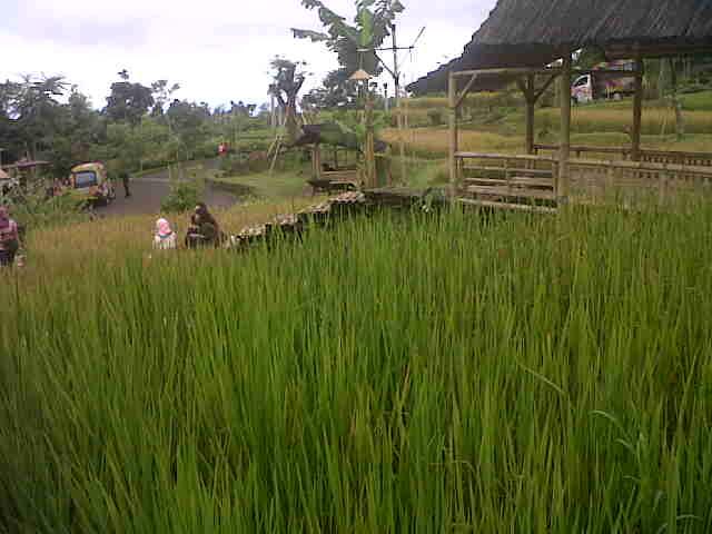 IMG01288-20150425-1232 Tempat Wisata Terdekat Villa Istana Bunga Lembang