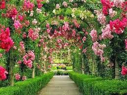 begonia-2 Taman Bunga Begonia Lembang Yang Cantik Mempesona