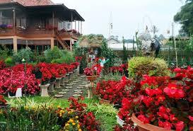 Taman Bunga Begonia Lembang Yang Cantik Mempesona